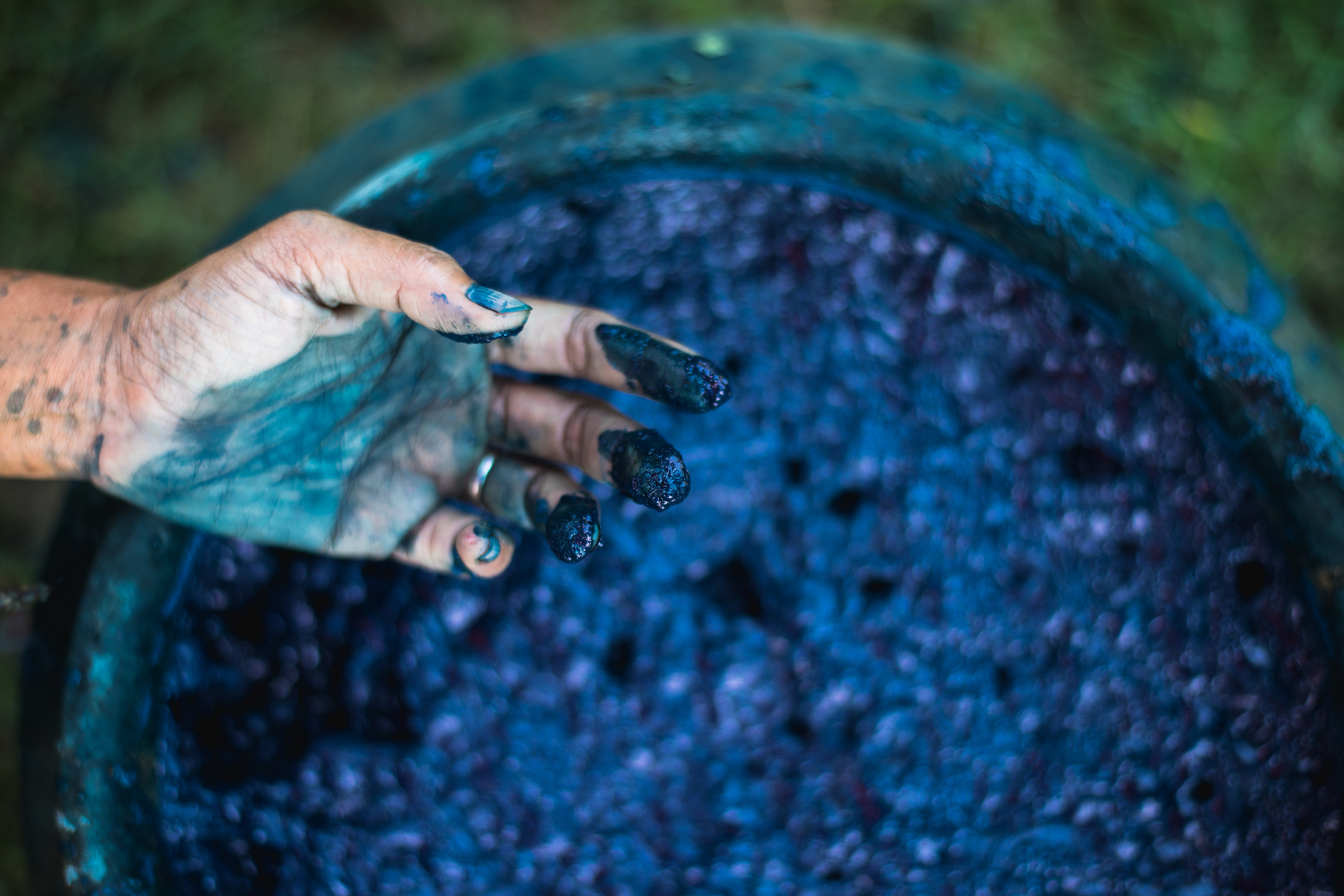 indigo dye stained hands over container of dye