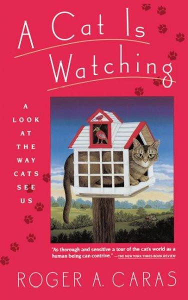 Cat Is Watching