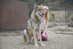Christina Huntington with wolf