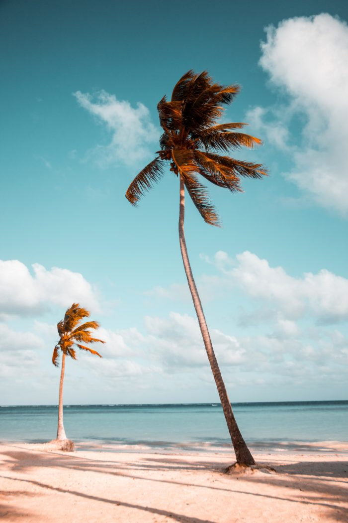 palm trees swaying on beach