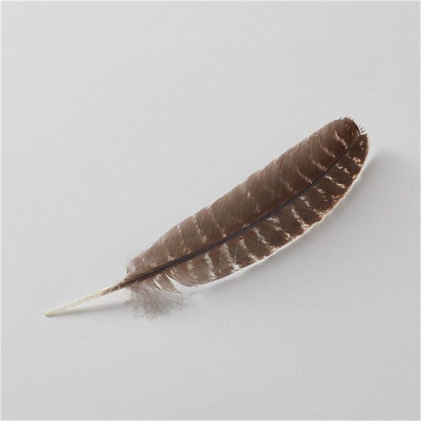 one brown turkey feather