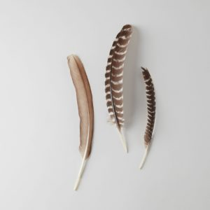 three turkey feathers, one brown, two brown + white stripes