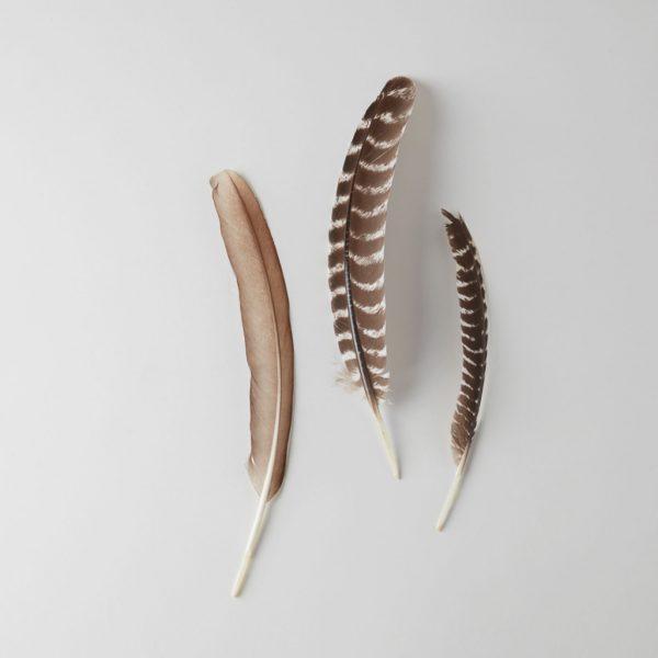 three turkey feathers, one brown, two brown + white stripes